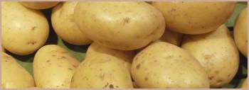 Eplucheuse à pommes de terre